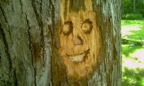 Šypsiukas medyje